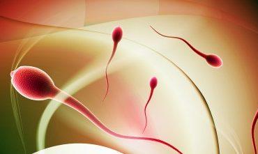 Sperma Hidup dalam Rahim Wanita