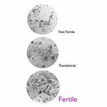 fertile focus2