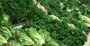sayuran hijau tua